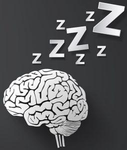 spánek - mozek