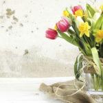 Přivítejte doma jaro! Oživte si bydlení barevnými dekoracemi!